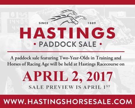 Hastings Horse Sale 2017