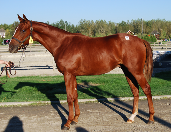2013 CTHS Yearling and Mixed Sale - Hip #19