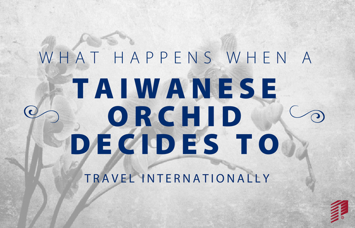 International Flower Delivery | What Happens When a Taiwanese Orchid Decides to Travel Internationally?